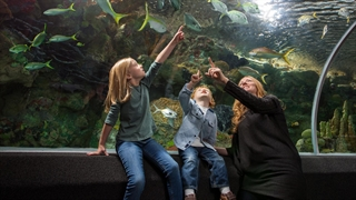 Photo of family viewing the Discovery World Aquarium